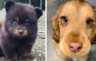 23 cachorros tan tiernos que ni siquiera parecen reales