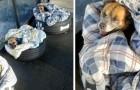 En busshållplats tar emot herrelösa hundar i området och erbjuder dem en varm filt att sova på