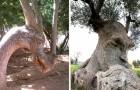 18 bomen die aan iets anders doen denken en mensen hebben verward met hun bizarre vormen