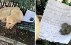 """""""Bitte adoptiert mich"""": die herzzerreißenden Worte des Briefes, der neben dem auf einer Bank ausgesetzten Hund gelassen wurde"""