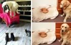 17 gatos traviesos que le hicieron pasar un mal rato a sus inquilinos los perros