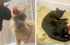 A couple of cats ask their human neighbors to let them into their house so they can give birth to their kittens in the heat