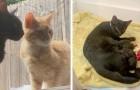 Ein Katzenpaar bittet die menschlichen Nachbarn darum, sie ins Haus zu lassen, um ihre Babys im Warmen gebären zu können