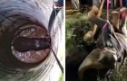 Un giovane elefante cade in un pozzo stretto e profondo: il video del salvataggio fa stare col fiato sospeso