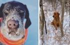Een man en zijn hond redden een puppy die vastzit in de sneeuw: de hond had zijn geur geroken