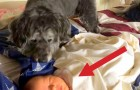 A dog gets on the bed while a baby is sleeping: What he does next is unbelievable!