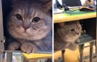 A girl takes her cat to class so as not to leave him alone and hides him under the desk