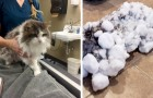 Eles encontram seu gato completamente congelado e coberto de neve: a corrida ao veterinário salva sua vida