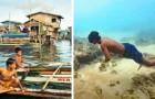 De leden van deze stam zijn geëvolueerd om in de zee te leven: ze kunnen tot 13 minuten in apneu blijven