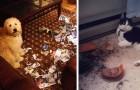 Animales problemáticos: 19 fotos de perros y gatos que no muestran algún remordimiento por sus fechorías