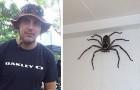 Dieser Mann hält einen großen Spinnenjäger im Haus: Er behandelt ihn, als wäre er ein gewöhnliches Haustier