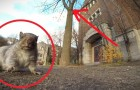 Een man probeert een eekhoorn te filmen, maar kan zich NIET voorstellen wat er gaat gebeuren!