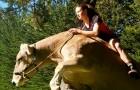 Les parents ne lui achètent pas de cheval : elle décide d'apprendre le saut d'obstacles à une vache