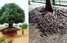 20 arbres qui nous montrent comment la volonté de vivre peut surmonter toute adversité