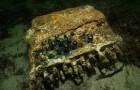 Ein Exemplar der gefürchteten deutschen Enigma-Maschine ist in der Ostsee geborgen worden