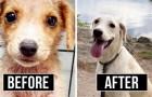 16 cães que foram adotados e agora expressam toda a felicidade de viver uma nova vida