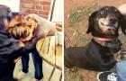 17 söta hundar som inte behöver några ord för att uttycka sin eviga trohet gentemot människor