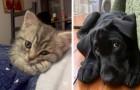 20 so niedliche Tiere, dass ihr Lust haben werdet, sie zu umarmen und ganz nah bei euch zu behalten