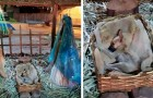 A woman passes by a nativity scene and notices a poor cold little dog sleeping in the manger