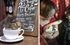 Prendre un café entourés de rats : ce bar laisse des dizaines de rongeurs en liberté entre les tables