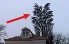 Vid en första anblick verkar det bara vara ett träd fullt med fåglar, men du kommer snart bli förvånad!