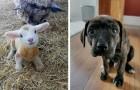 17 cachorros tan tiernos que pueden hacer que incluso los días más tristes y terribles sean agradables
