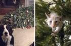 20 Haustiere, die um jeden Preis mit dem Weihnachtsbaum