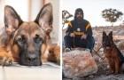 O noivo usa as economias do casamento para salvar a vida do seu cachorro: a sua noiva não fala mais com ele