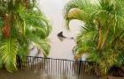 Ein Hai schwimmt nach einer Überschwemmung durch Häuser: Verstörendes Bild sorgt für Diskussion im Netz