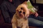 La reazione di questo cane ad OGNI parola che gli viene detta è esilarante!