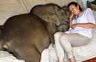 Eine Frau rettet ein Elefantenbaby und ein starkes Band entsteht: Er ist ihr Schatten geworden