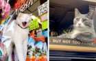 15 cats who invaded the aisles in shops and have no intention of leaving