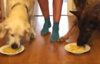 2 cani di razza diversa e un piatto di spaghetti: chi pensate che lo finirà per primo?
