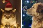 17 animali domestici pronti a festeggiare il Natale assieme alla loro famiglia umana
