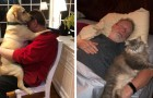 17 people who didn't want a pet in the house and now treat it like a family member