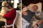 17 personer som inte ville ha ett husdjur men som nu behandlar det som att det vore en familjemedlem
