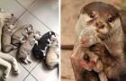 Amore materno a quattro zampe: 17 foto di mamme con i loro splendidi cuccioli