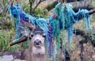Ein Hirsch wird in einen Garten gelockt und sein Geweih verfängst sich in den Schnüren der Hängematte