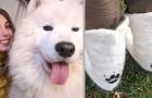 Son chien perd tellement de poils que la maîtresse décide de les ramasser et d'en revêtir une paire de bottes