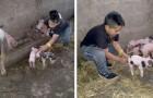 Han hinner inte göra klart sina läxor för att han blivit tvungen att hjälpa sin gris under förlossningen, men hans lärare förlåter honom