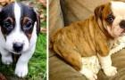 Honderden puppy's die tijdens de lockdown door families zijn gekocht, zijn te koop aangeboden