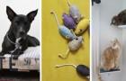10 idee una più bella dell'altra per far felici cani e gatti con progetti fai-da-te