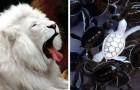15 foto di animali albini che non hanno bisogno di altri colori per essere estremamente affascinanti