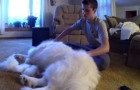 A guy starts brushing his dog ... The end result is incredible!