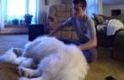 Un joven inicia a peinar a su perro...el resultado final tiene algo increible!