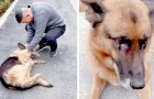 A retired police dog gets so excited when he sees his handler again - he had never forgotten him