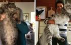 20 Fotos von eleganten und gigantischen Maine Coon Katzen, vor denen wir uns alle etwas kleiner fühlen
