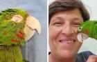 Una protesi ricostruisce alla perfezione il becco danneggiato del pappagallo e lui la sfoggia con gratitudine