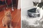 21 grappige foto's laten perfect zien hoe katten de grootste vierpotige schurken zijn