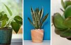 Les astuces pour prendre soin au mieux des plantes plus faciles à cultiver